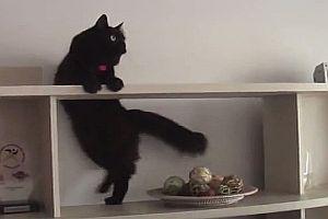 Eine Katze auf Mission