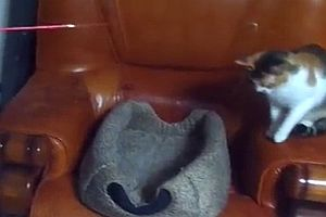 Katze spielt mit Katze