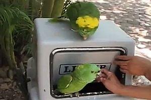 Lachender Papagei in einer Mülltonne