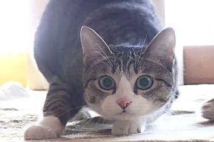 Eine Katze auf der Pirsch