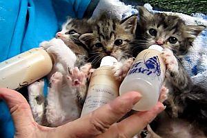 Drei Kätzchen bekommen ihre Flaschen