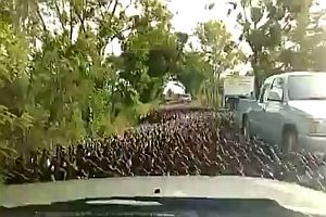 Gänsemarsch im Straßenverkehr