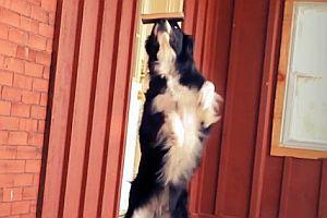Balancierender Hund