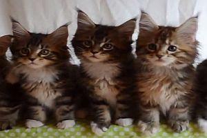 Sieben süße Kätzchen