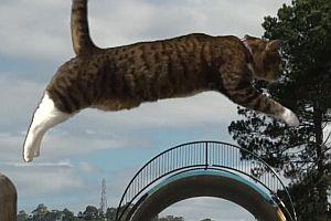 Parkour-Katze