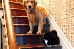 Hund traut sich nicht an Katze vorbei