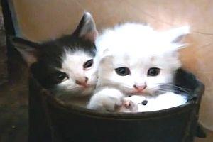 Drei Kätzchen in einem Stiefel