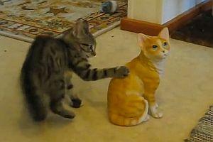 Katze kämpft gegen Keramikkatze