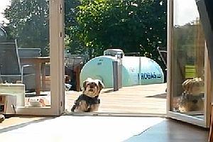 Hund kommt nicht rein