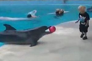 Kleiner Junge spielt mit einem Delfin