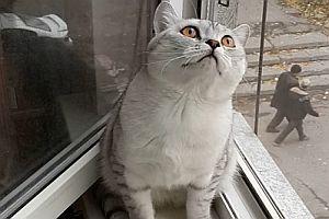 Katze ist fokussiert