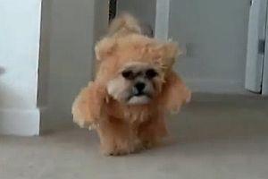 Hund im Bärenkostüm
