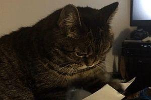 Katze spielt mit Papier