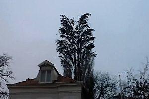 Vogelschwarm fliegt gemeinsam los