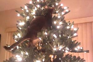 Katzen in Weihnachtsbäumen