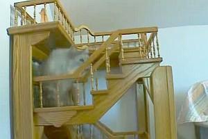Katzenfreundliches Haus