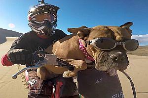 Hund auf einem Dirt Bike