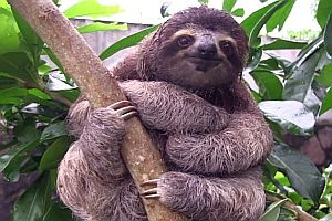 Faultiere - Sloth Magic