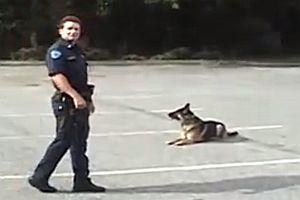 Polizeihund steigt allein ins Auto