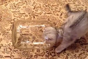 Katze im Glas