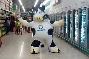 Tanzende Kuh im Supermarkt