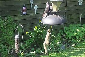 Schutz gegen Eichhörnchen