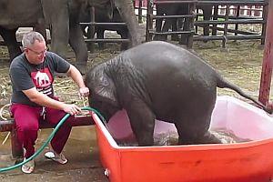 Elefantenbaby nimmt ein Bad