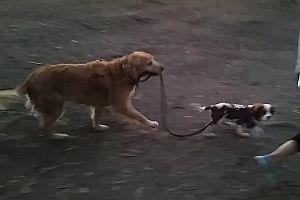 Hund führt Welpen an der Leine