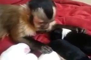 Affe kuschelt mit Welpen