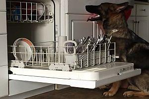 Hund hilft beim Geschirrspülereinräumen