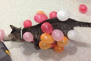 Katze spielt mit Luftballons