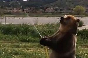 Bär spielt mit Wasserschlauch