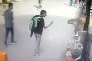 Mann zeigt Affe den Mittelfinger