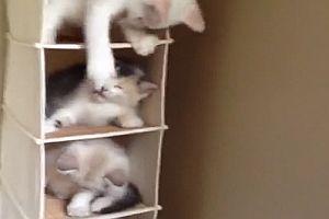 Katzen-Regal