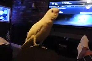 Papagei bounced zu Old School Rap
