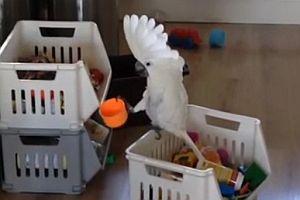 Kakadu schreit in einen Plastikbecher