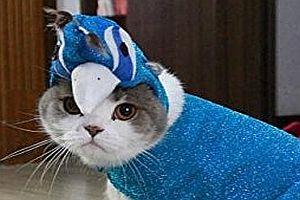 Katze als Pfau verkleiden