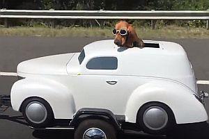 Hund in seinem Motorradanhänger