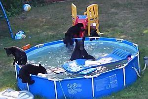 Bärenfamilie planscht im Pool