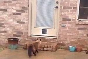 Eine neue Katzenklappe