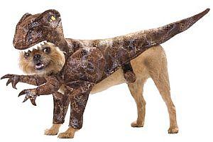 Hund als Dinosaurier verkleiden