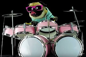 Hund spielt Schlagzeug