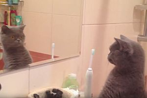 Katze entdeckt sich selbst im Spiegel