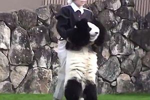 Panda rollt sich Abhang runter