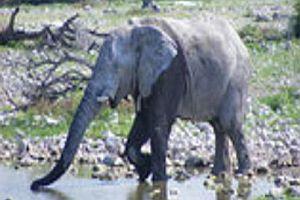 1Kg Elefantenscheiße