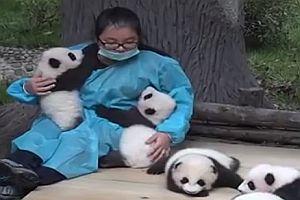 Kuscheln mit Pandas