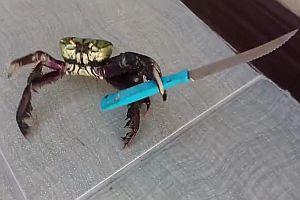 Gangster-Krabbe