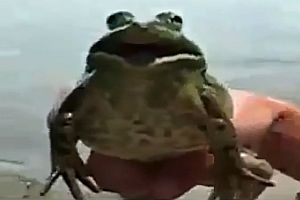 Frosch singt den Imperial March