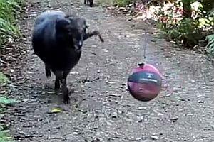 Ein Ball im Wald