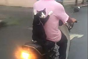Katze als Moped-Beifahrer